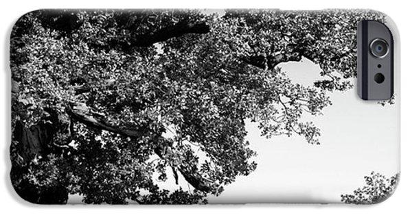 Ancient Oak, Bradgate Park IPhone 6 Case