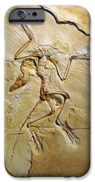 Recently Sold -  - Fauna iPhone Cases - Archaeopteryx Fossil, Berlin Specimen iPhone Case by Chris Hellier