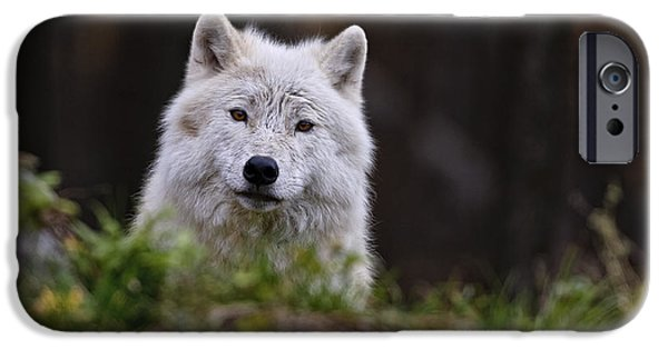 Wolf Pics Mixed Media iPhone Cases - Arctic Wolf In Autumn iPhone Case by Michael Cummings