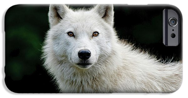 Wolf Pics Mixed Media iPhone Cases - Arctic Wolf iPhone Case by Michael Cummings