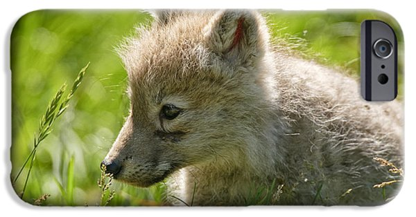 Wolf Pics Mixed Media iPhone Cases - Arctic Wolf Pup In Grass iPhone Case by Michael Cummings