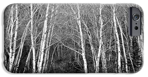 Aspen Forest Black And White Print IPhone 6 Case