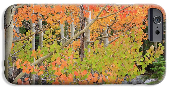 Aspen Stoplight IPhone 6 Case by David Chandler