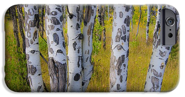 IPhone 6 Case featuring the photograph Aspens by Gary Lengyel