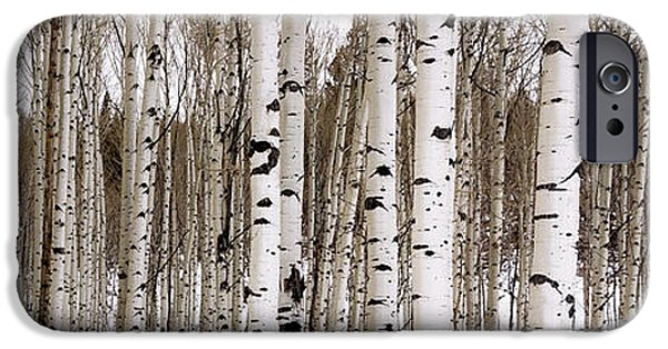 Nature iPhone 6 Case - Aspens In Winter Panorama - Colorado by Brian Harig
