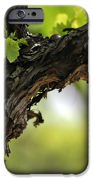IPhone 6 Case featuring the photograph At Lachish Vineyard by Dubi Roman