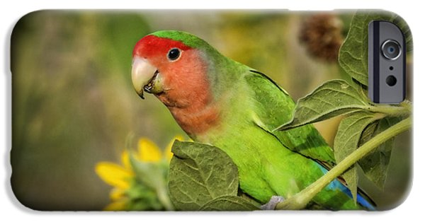 Lovebird iPhone Cases - At the End of the Rainbow  iPhone Case by Saija  Lehtonen