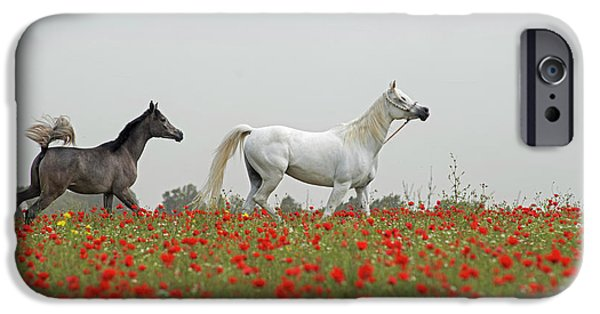 At The Poppies' Field... IPhone 6 Case by Dubi Roman