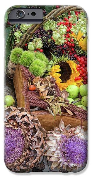 Sunflower Seeds iPhone 6 Case - Autumn Abundance by Tim Gainey