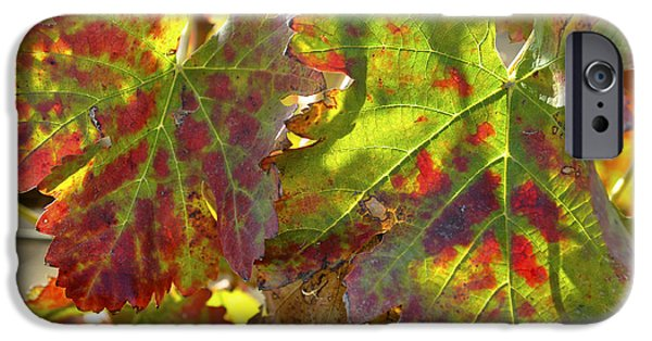 IPhone 6 Case featuring the photograph Autumn At Lachish Vineyards 2 by Dubi Roman