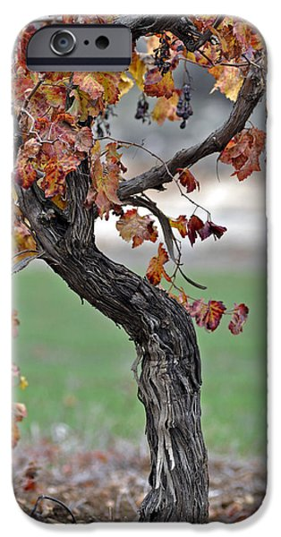 IPhone 6 Case featuring the photograph Autumn At Lachish Vineyards 3 by Dubi Roman