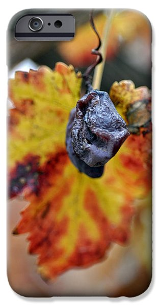 IPhone 6 Case featuring the photograph Autumn At Lachish Vineyards 5 by Dubi Roman