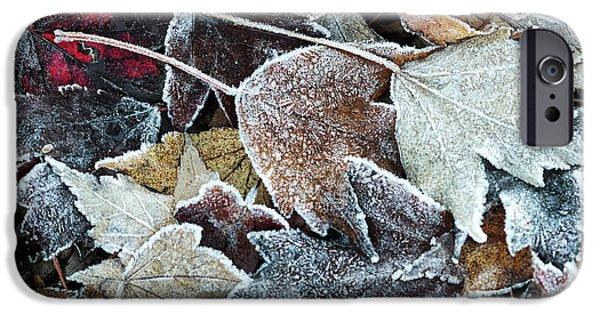 Autumn Ends, Winter Begins 1 IPhone 6 Case