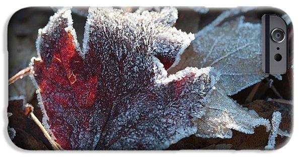 Autumn Ends, Winter Begins 2 IPhone 6 Case