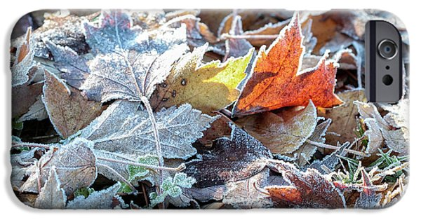 Autumn Ends, Winter Begins 3 IPhone 6 Case