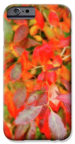 Redish iPhone Cases - Autumn foliage iPhone Case by Gaspar Avila