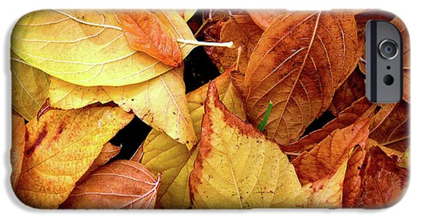 Brush Photographs iPhone Cases - Autumn leaves iPhone Case by Carlos Caetano