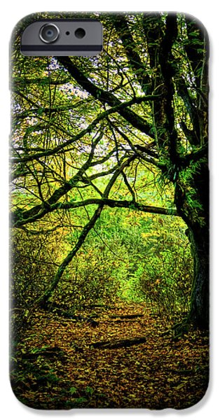 IPhone 6 Case featuring the photograph Autumn Light by David Patterson