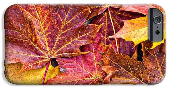 Autumn iPhone Cases - Autumnal Carpet iPhone Case by Meirion Matthias