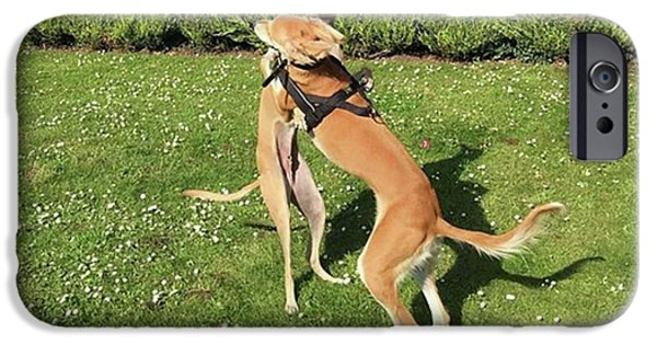 iPhone 6 Case - Ava The Saluki And Finly The Lurcher by John Edwards