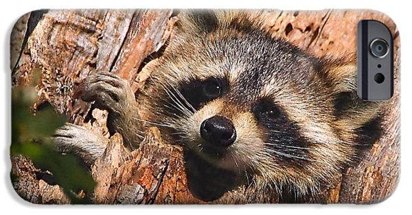 Raccoon iPhone Cases - Baby Raccoon iPhone Case by William Jobes