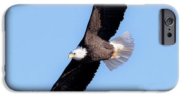Bald Eagle Overhead  IPhone 6 Case