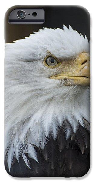 Bald Eagle Portrait IPhone 6 Case by Gary Lengyel