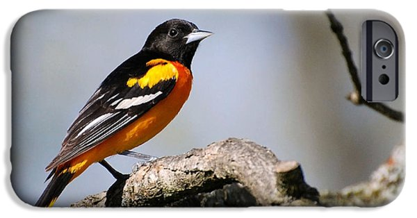 Baltimore Oriole IPhone 6 Case