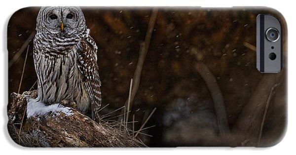 Michael Cummings Mixed Media iPhone Cases - Barred Owl on Log iPhone Case by Michael Cummings