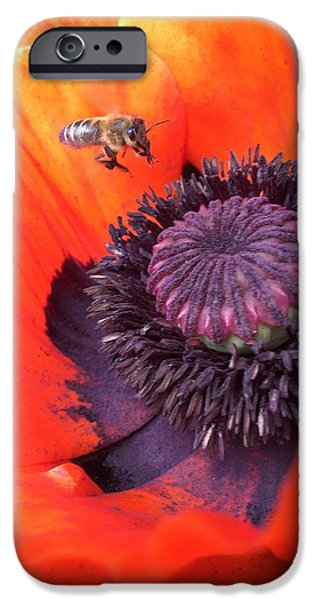 iPhone 6 Case - Bee Is Visiting A Poppy by Orphelia Aristal