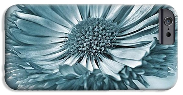 Summer iPhone 6 Case - Bellis In Cyan  #flower #flowers by John Edwards