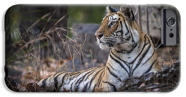 Bengal Tiger IPhone 6 Case by Hitendra SINKAR