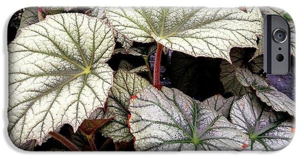 Big Begonia Leaves IPhone 6 Case by Nareeta Martin