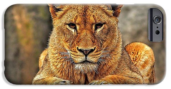 Big Cat Lion Collection IPhone 6 Case