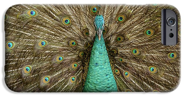 IPhone 6 Case featuring the photograph Peacock by Werner Padarin