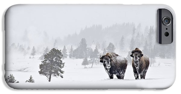 IPhone 6 Case featuring the photograph Bison In The Snow by Gary Lengyel