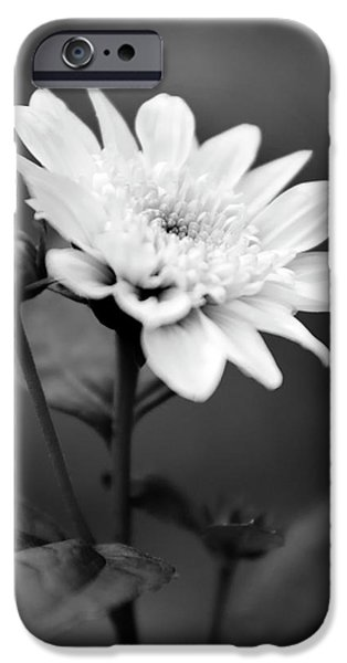 IPhone 6 Case featuring the photograph Black And White Coreopsis Flower by Christina Rollo