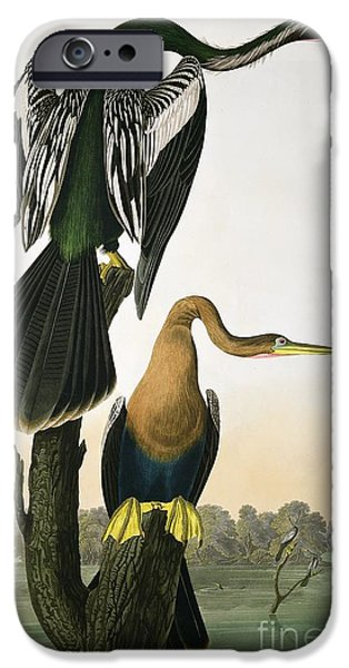 River Drawings iPhone Cases - Black Billed Darter iPhone Case by John James Audubon