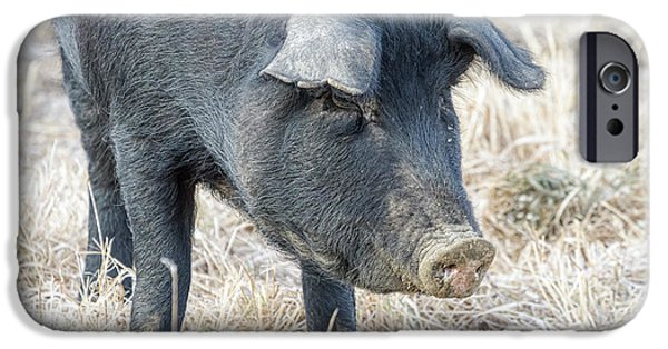 IPhone 6 Case featuring the photograph Black Pig Close-up by James BO Insogna
