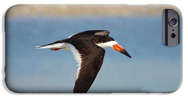 Razorbill iPhone Cases - Black Skimmer in Flight iPhone Case by Barbara Bowen