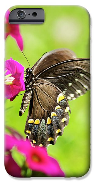 IPhone 6 Case featuring the photograph Black Swallowtail Butterfly by Christina Rollo