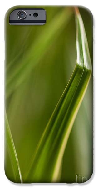 Botanical Photographs iPhone Cases - Blades Abstract 3 iPhone Case by Mike Reid