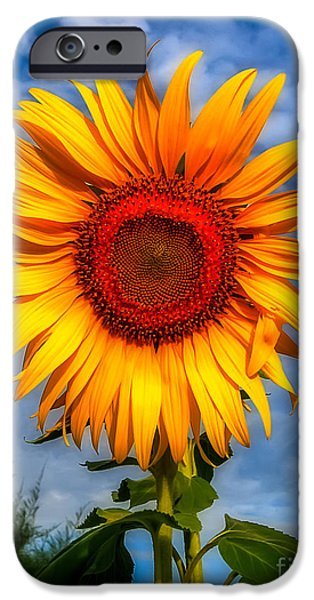 Sunflower Seeds iPhone 6 Case - Blooming Sunflower  by Adrian Evans