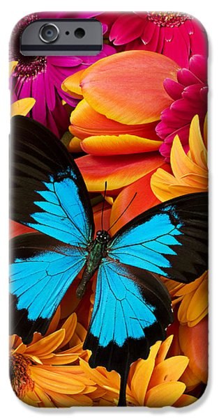 Colorful iPhone 6 Case - Blue Butterfly On Brightly Colored Flowers by Garry Gay