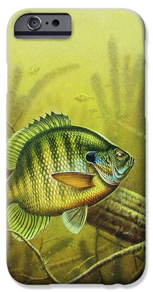 Fish Pond iPhone Cases - Bluegill and Jig iPhone Case by JQ Licensing