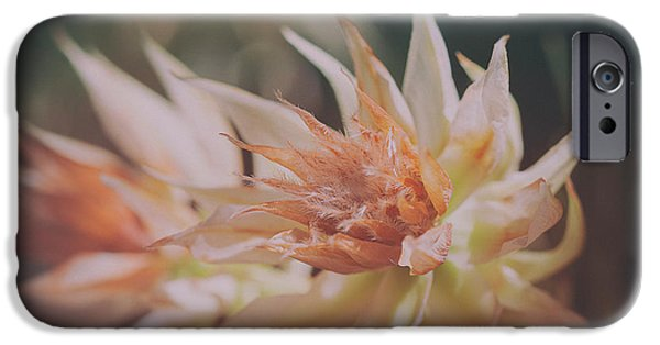 IPhone 6 Case featuring the photograph Blushing Bride by Linda Lees