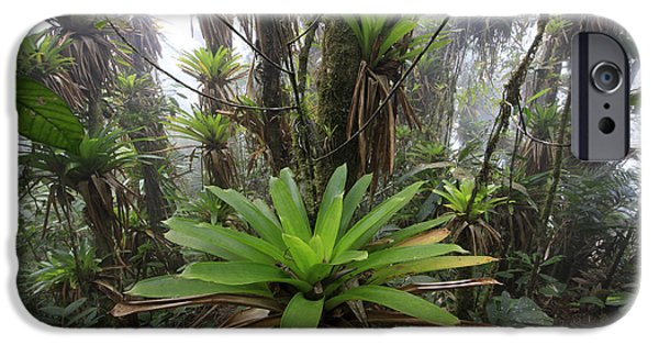 Bromeliad iPhone Cases - Bromeliad Bromeliaceae And Tree Fern iPhone Case by Cyril Ruoso