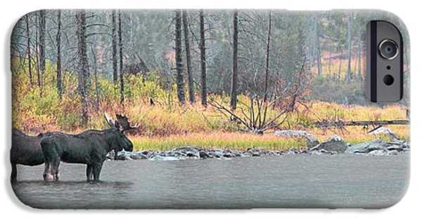 Rainy Day iPhone Cases - Bull and Cow Moose In East Rosebud Lake Montana iPhone Case by Gary Beeler