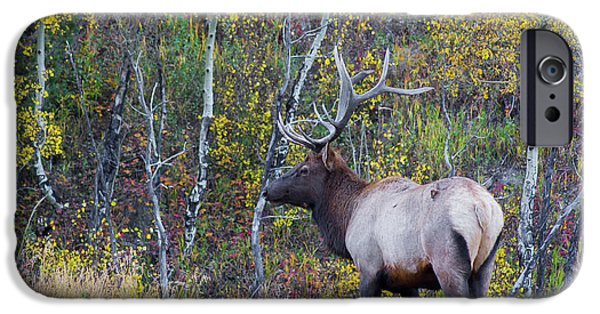 IPhone 6 Case featuring the photograph Bull Elk by Aaron Spong