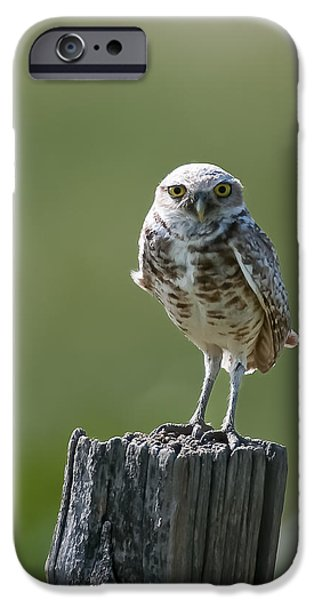 IPhone 6 Case featuring the photograph Burrowing Owl by Gary Lengyel